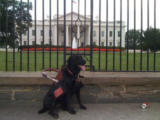 Adele @ The White House