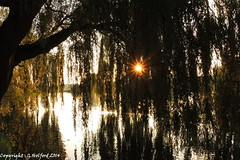 Goodbye 2014 (Holfo) Tags: trees sunset england sun evening nikon outdoor dusk serene lanscape p7800