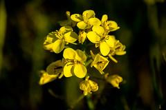 Viewfinder-13 (sven.vansantvliet) Tags: blue shadow sky flower colors yellow fleurs jaune drops weide couleurs schaduw geel bloem druppel tulp kleuren tullip paardebloem boterbloem pisbloem lentebloesembloemenbijhuis