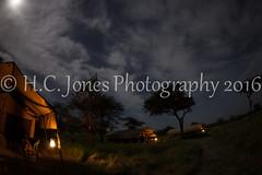 IMG_6072-2 (hcjonesphotography) Tags: africa park elephant black tree nature birds animal umbrella tanzania monkey cub rainbow buffalo jackal eagle crane outdoor lion tent lodge lizard ostrich safari ngorongoro national leopard crater rhino lions zebra cheetah giraffe hippo impala serengeti hyena maasai hornbill stork mongoose wildebeest warthog manyara tarangire dikdik tented