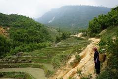 Hmong lady in Sapa, North Vietnam (sarahelizamoody) Tags: travel lady asia basket terrace sony vietnam ethnic sapa hmong riceterrace ethnicwoman