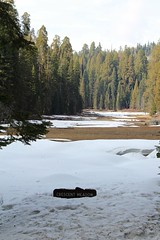 Crescent Meadow in spring time (daveynin) Tags: snow nps meadow trail swamp sequoia