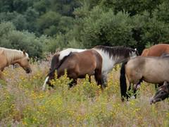 Vizinhana (LuPan59) Tags: oeiras cavalos lupan59