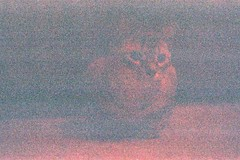 (Rachel/) Tags: 35mm film filmgrain mistake misexposure grain