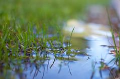 Un charco/ one puddle. Busqueda del Tesoro 2016 (adrianerika1) Tags: lluvia pioggia rain paddle pozzanghera charco