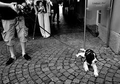 000013 0 (la_imagen) Tags: sokak sw bw blackandwhite siyahbeyaz street streetandsituation streetlife strasenfotografieistkeinverbrechen kpek dog hund