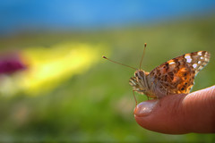 Un bel weekend lungo al Cugn di Goria (XXAquarius) Tags: cugn di goria alpi weekend natura nature passeggiate prati estate summer farfalla papillon