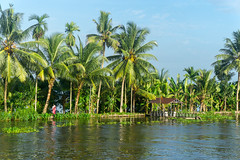 Appelley (Kerala), India (DitchTheMap) Tags: travel blue sunset sea summer vacation sky india house tree tourism nature water beautiful silhouette river landscape boat scenery asia flickr paradise ship coconut background indian horizon houseboat kerala palm tropical concept backwaters backwater 2016 allepey appelley