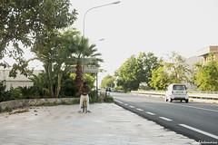 (Aldo Tomaino_01) Tags: strada mare calabria nocera falerna statale18