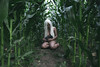 Life (SaraiDeza) Tags: photography photo creativephotography conceptualphotography conceptual nude woman girl film beautiful nature inspired explore rabbit field corn love portrait selfportrait