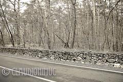Spoon River Anthology Henry C. Calhoun (claudionimuc) Tags: spoonriver edgarleemasters america selenio seppia crema poesia morti fernandapivano pivano antologia de andre pavesi 2015 art rural