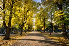 Autumn (_gate_) Tags: zentralfriedhof wien sterreich at vienna austria central cemetery yellow orange