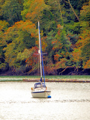 View from Agatha Christie's Greenway Estate, Devon (photphobia) Tags: agathachristie greenway greenwayestate galmpton riverdart devon southdevon nationaltrust oldwivestale outdoor outside green river water boat boats ship ships barge barges