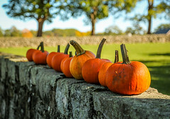 ~All in a Row~ (cheryl c.) Tags: pumpkins inarow autumn trees bokeh sunshine light appletonfarm outside withfriends