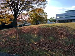 Leaves (tripu) Tags: november autumn brown tree beautiful grass leaves japan campus warm university hill sunny kanagawa sfc shonan fujisawa keio shonandai 2014 keiouniversity shonanfujisawa