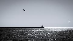 Two Harbors (David F. Panno) Tags: usa seagulls lighthouse minnesota silhouette twoharbors breakwater agatebay sonyilce7r fe2470mmf4zaoss