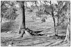 Land & Water (Xerethra) Tags: bw lake nature water 35mm spring nikon europe sweden natur may sverige scandinavia vatten maj vår mälaren sjö svartvit järfälla 2013 nikond80