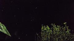 The Pleiades, Aldebaran, Bellatrix  and Betelgeuse. (gabriel_birsanu) Tags: betelgeuse pleiades aldebaran bellatrix astrometrydotnet:status=solved astrometrydotnet:id=nova896278