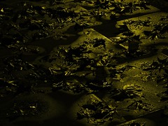wet leaves on pavement at night, gascoyne road e9, 2014-11-24, 02-05-41 (tributory) Tags: road street winter light abstract cold london texture leaves weather yellow night dark shiny pattern pavement hackney sodium flagstone e9 eastlondon pavingstone