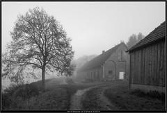 Leica M Monocrom with Tri-Elmar-M 16-18-21/4 (Dierk Topp) Tags: leica wood trees bw fog sw monochrom wald bume wate leicammonochrom leicatrielmarm1618214