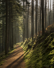 Sunlit Forest Path (shawn~white) Tags: sun plant tree wales forest woodland moss place unitedkingdom lightsource pontrhydygroes hafodestate