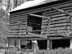 Log Barn, Wilson Farm — Wayne Township, Warren County, OH (Pythaglio) Tags: county trees roof ohio film metal barn early photo log sill farm piers wayne logs structure historic steeple odd scanned wilson cantilevered warren curious unusual elevated agriculture township fascinating waynesville peculiar breezeway hewn harveysburg notching hewed doublepen crosswalls