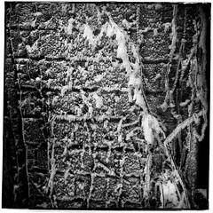 Le mur gel/Icy wall (bob august) Tags: winter bw ice blackwhite montral noiretblanc hiver squareformat janvier glace iphone villeray 2015 murdebriques formatcarr iphone4 alienskinsoftware appaltphoto