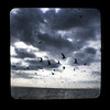 MIKE4683gulls (Michael William Thomas) Tags: ocean wedding sky sun beach photography buffalo photographer florida gulls manatees mikethomas michaelthomas mtphoto michaelwthomas