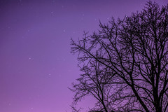 Stars in Forest Park (Elyssa Drivas) Tags: park nyc nightphotography trees winter sky newyork colors night forest walking stars colorful walk queens golfcourse forestpark clearsky purplesky clearskies coldnight wintersnight forestparkgolfcourse