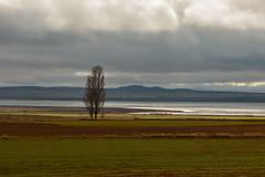 Jiloca 1  Laguna de Gallocanta ( Diciembre 2014 ) (carlosjarnes) Tags: nikon aragon laguna diciembre gallocanta jiloca