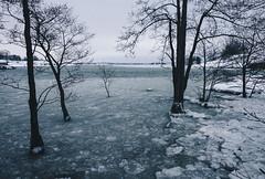 winter flood (miemo) Tags: trees winter sea snow tree ice nature finland landscape helsinki europe flood olympus shore omd uunisaari em5 panasonic1235mmf28