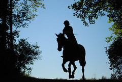 Eventing Horse Silhouette Eventing Silhouette Morgan Arrick Tags Horse Silhouette Cross Country