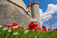 Castle and Tulips Arundel (Edwinjones) Tags: old flowers blue light red england sky flower color green castle history texture nature photoshop downs photography sussex photo spring woods soft tulips westsussex photos sony scenic picture pic tulip vegetation greenery dslr arundel springflowers southdowns topaz battlements arundelcastle dukeofnorfolk dslra550