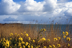 Paard van Marken (Arne Kuilman) Tags: lighthouse film netherlands rollei iso200 nederland slidefilm pointandshoot analogue vuurtoren marken bloemen cr200 paardvanmarken rolleigiro90