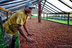 Cocoa Grower (Fursa) Tags: africa portrait sao tome principe zoyanaskova