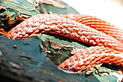Hold Tight ! (Steve Lundqvist) Tags: macro closeup wire rope ropes