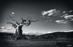 Espectro (gen0100) Tags: trees blakandwhite desert