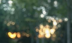 (palaabrasusadas...) Tags: light luz photoshop photography photo photographer photographie bokeh amanecer photograph desenfoque rbol enfoque photoshopcreativo