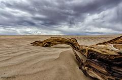 Descansando en la Arena // Laying in the Sand (hdezrayco) Tags: usa naturaleza storm nature clouds de la sand dunes valle arena muerte nubes deathvalley tronco dunas eeuu