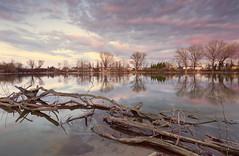 My first pond (Astarotte73) Tags: sunset pond tramonto reflexions riflessi goldenhour pavia stagno lungavilla sigma1224exdghsm parcopalustre oradorata floatingtrunks tronchigalleggianti formatthitechgnd09stops