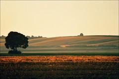 Sunset (Katarina 2353) Tags: sunset summer film landscape nikon europe serbia vojvodina srbija beska katarinastefanovic katarina2353