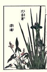 Japanese iris and Chinese arrowhead (Japanese Flower and Bird Art) Tags: iris flower art japan japanese book chinese picture arrowhead woodblock ikeda eisen iridaceae ukiyo ensata sagittaria alismataceae trifolia readercollection