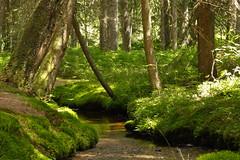 Waldidyll (vivalatinoamerica) Tags: deutschland wasser sommer natur bach grn wald schwarzwald baum freizeit moos badenwrttemberg erholung ruhe bernau gewsser