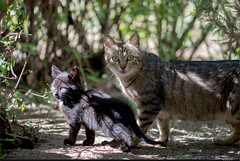 Family (listera_ovata) Tags: cat manual kedi zuiko200mmf4 olympus200mmf4 sonya7ii