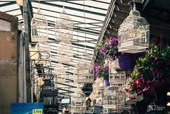 Beautiful cages for beautiful birds (alewomon) Tags: europa europe france francia paris eiffel tower arcdetriomphe sena minimalism conceptual