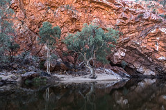 MacDonnell Ranges Ormiston Gorge Northern Territory-2
