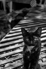 Savage Cat (Edd Leyva) Tags: tepoztln morelos mistic tepozteco travel climb cat mexico nikon d3200 bw