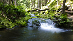 Czech nature (vehykl.ova) Tags: bilaopava river forest wildness karlovastudanka jeseniky