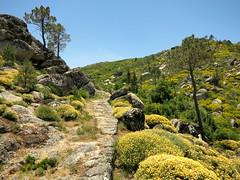 IMG_9262 (craigharrisnelson) Tags: manteigas portugal hiking boar route