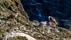 20160804-20160804-DSC00469 (auberginbear) Tags: iceland roadtrip landscape wanderlust naturephotograph volcano mountain waterfall horse sheep whale sonynex geysir sorcery sunset